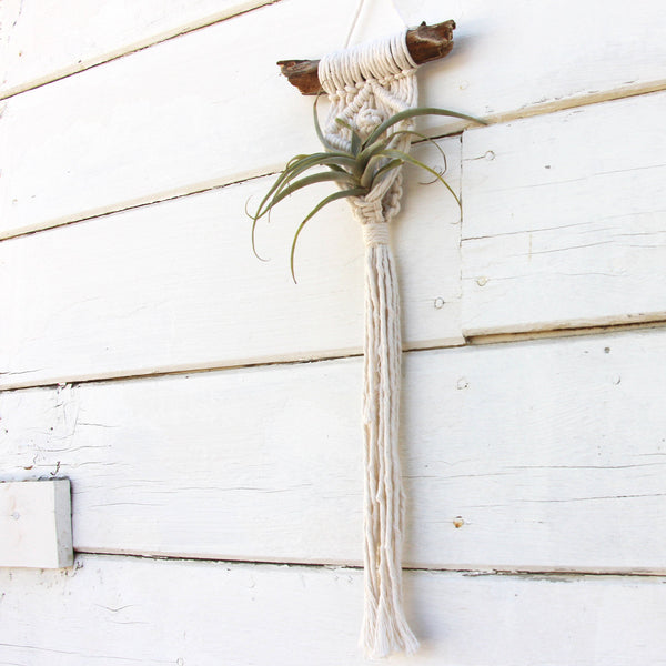 Macrame Air Plant Holder - The Eye - White - Bohemian Home Decor Wall Hanging