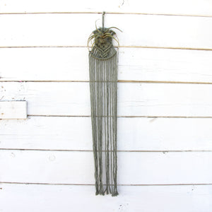Macrame Air Plant Holder - Flora - Sage - Bohemian Home Decor Wall Hanging