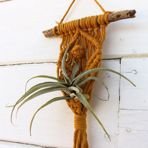 Macrame Air Plant Holder - The Eye - Mustard - Bohemian Home Decor Wall Hanging