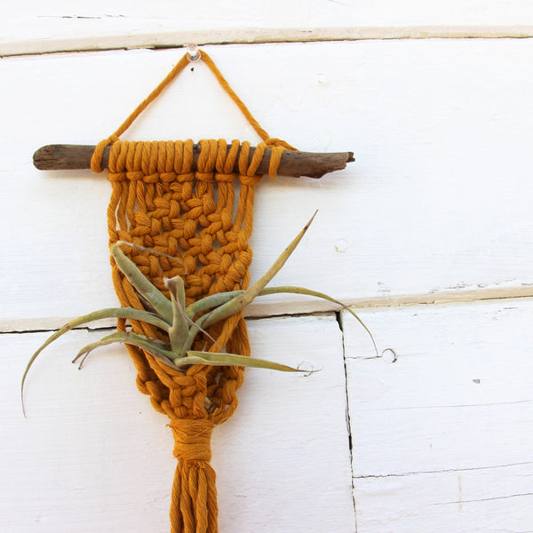 Simple Macrame Air Plant Holder - Mustard - Bohemian Home Decor Wall Hanging