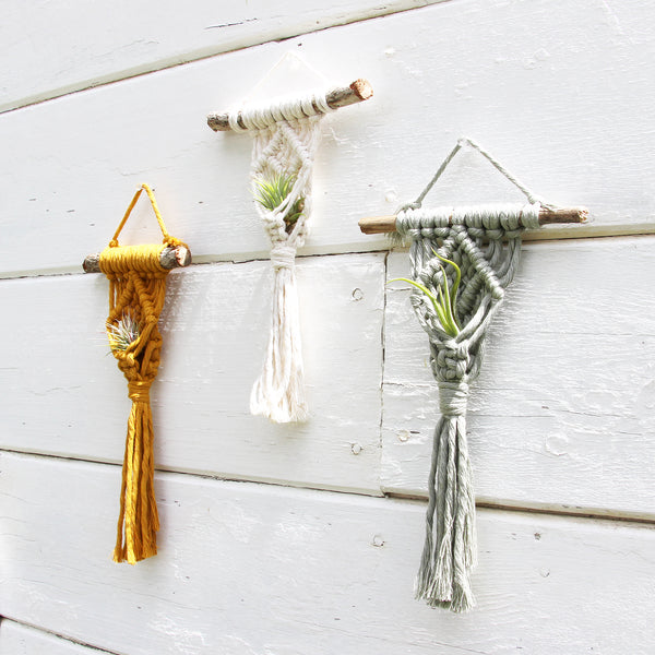 Macrame Air Plant Holder - Mini - Bohemian Home Decor Wall Hanging