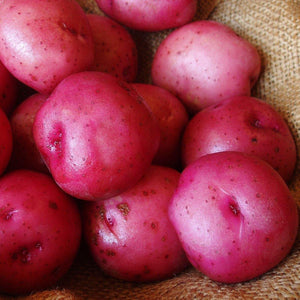 Potatoes Red, 5 lbs - Hardie's Direct Houston, TX