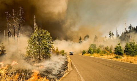 Impact of wildfire on lungs