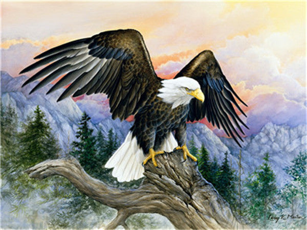 Eagle Paint By Numbers Kits UK For Adult Y5383