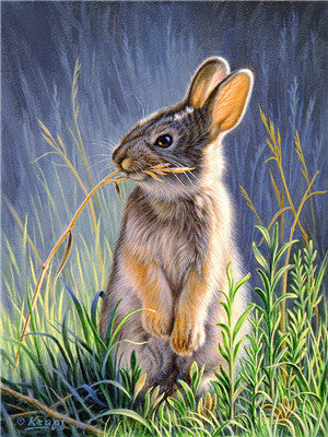 Animal Rabit Paint By Numbers Kits UK For Adult Y5647