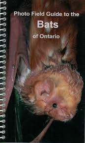 Photo Field Guide to Bats of Ontario