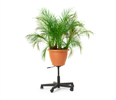 Office Planter
