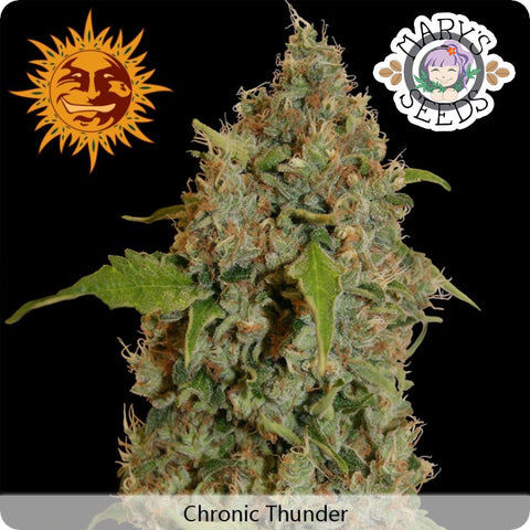 Chronic Thunder ♀