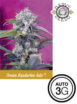 Cream Mandarine Automatic ♀