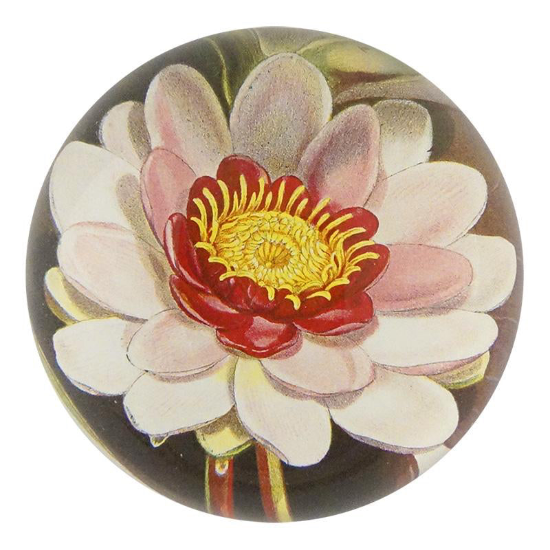 Waterlily Dome Paperweight - Mag.Pi