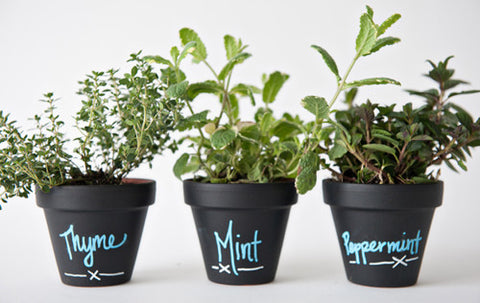 Upcycle Old Plant Pots with Chalk Paint
