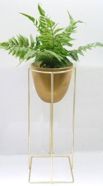 Fern In Gold Pot & Stand 20x20x50cm