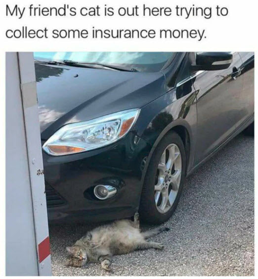 Funny Animal Meme Cat Insurance Fraud