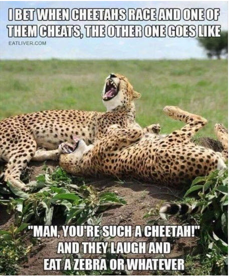 Funny Animal Meme Cheetah Race Laughing