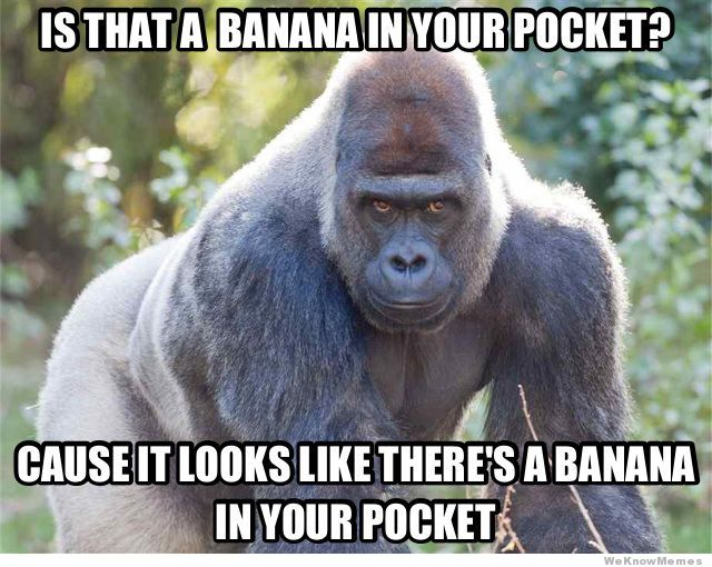 Funny Animal Meme Is that a Banana in your pocket gorilla