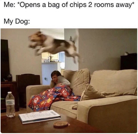 funny-animal-meme-opens-bag-of-chips-2-rooms-away-flying-dog