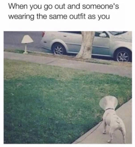 Funny Dog Meme When you go outside and someones wearing the same outfit as you