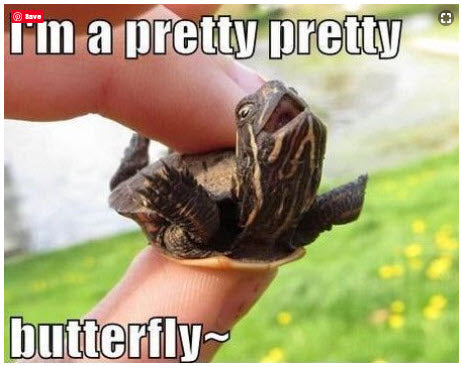 Funny Animal Meme Turtle Im a Pretty Butterfly