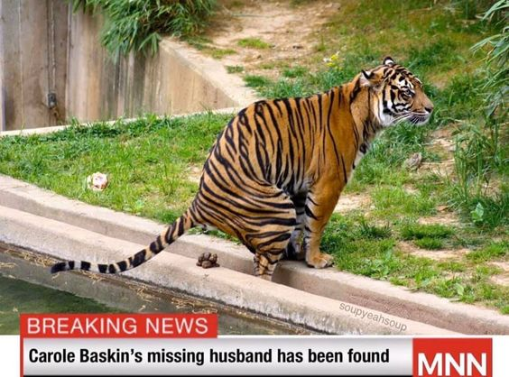 Funny Animal Meme Carole Baskins Husband Has Been Found