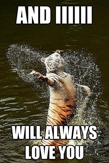 Funny Animal Meme Tiger singing Whitney Houston