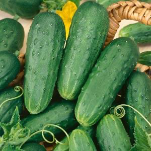 Cucumber - Homemade Pickles