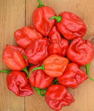 Pepper - Habanero Red