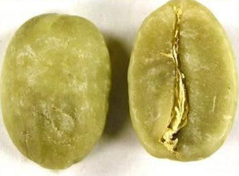 Green Coffee Bean (Specially Graded, Prepared and Packed)