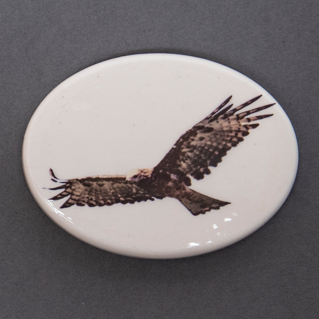 Fridge Magnet - Wedge Tailed Eagle