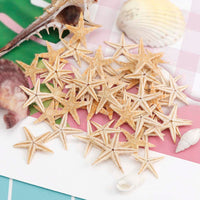 1 Box Natural Starfish Seashell Beach Craft