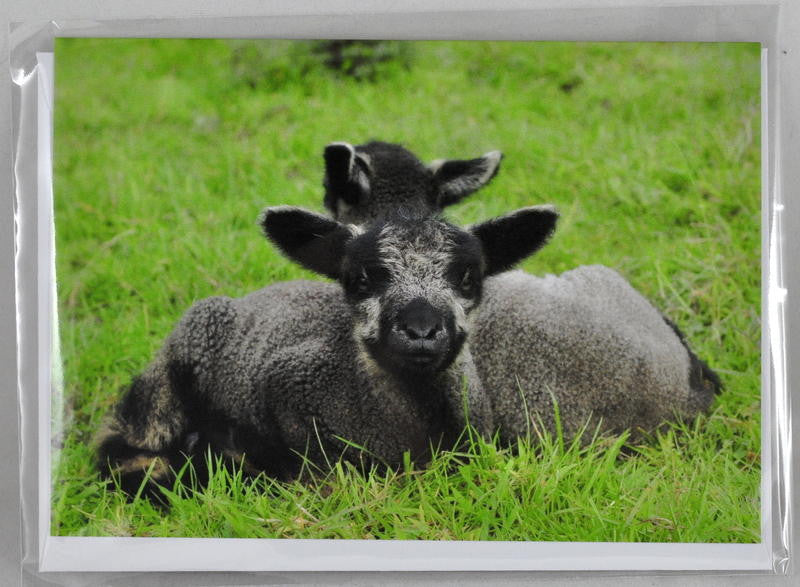 Single Sheep Greetings Card - 'Moppet Twins'