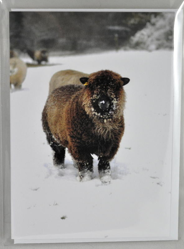 Single Sheep Greetings Card - 'Molly' (1)