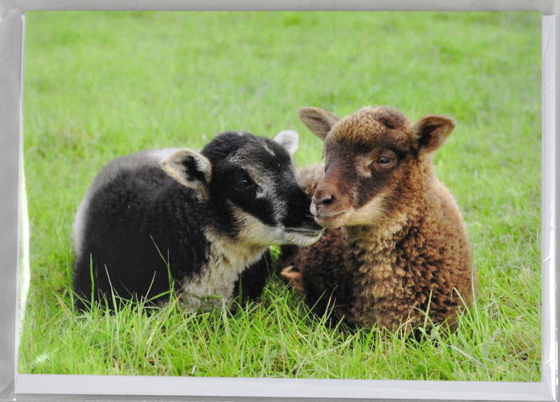 Single Sheep Greetings Card - Umber and Daisy