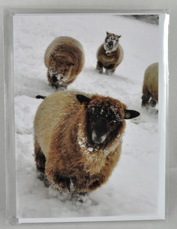 Single Sheep Greetings Card - 'Smallest Sheep' (2)