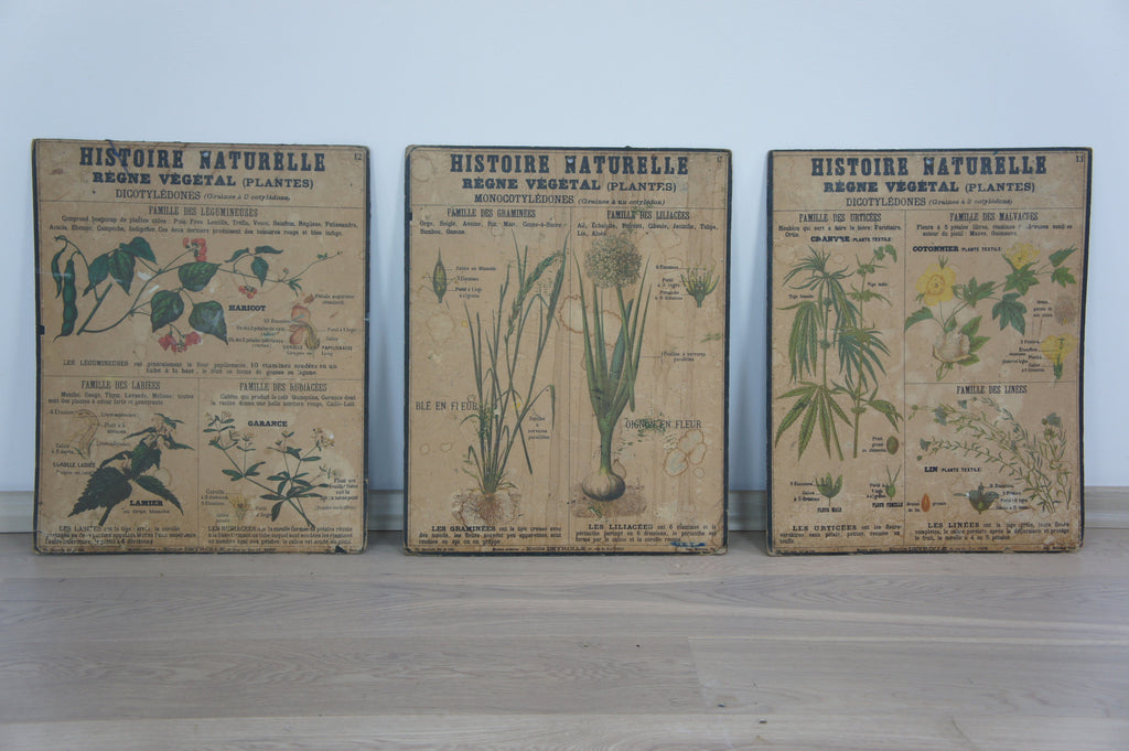 Set of three Botanical Posters