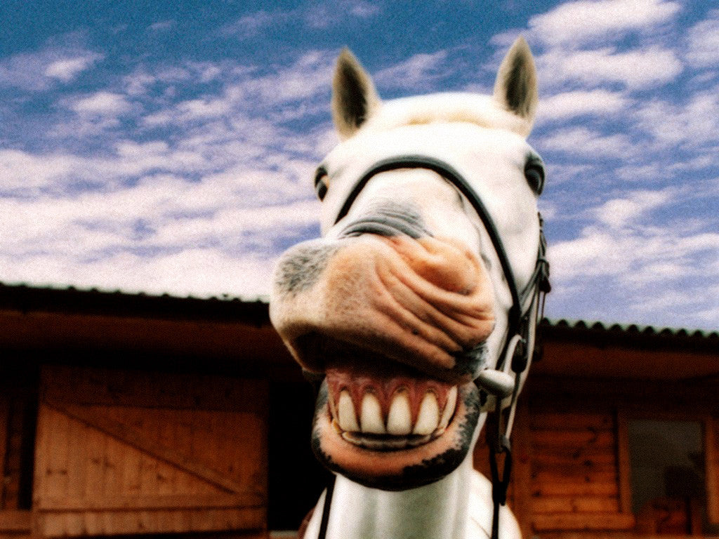 How to Keep Your Horse Happy | The Equestrian Store