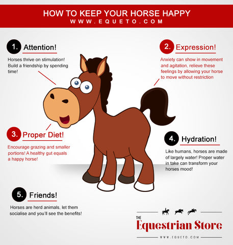 How to keep your horse happy!