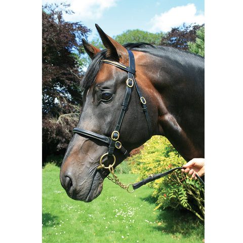 Mackey In Hand Fancy Clincher Bridle - Equeto