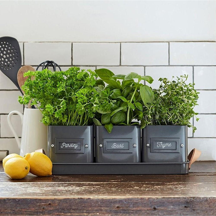 BURGON & BALL | Herb Pots with Leather Handled Tray - Charcoal