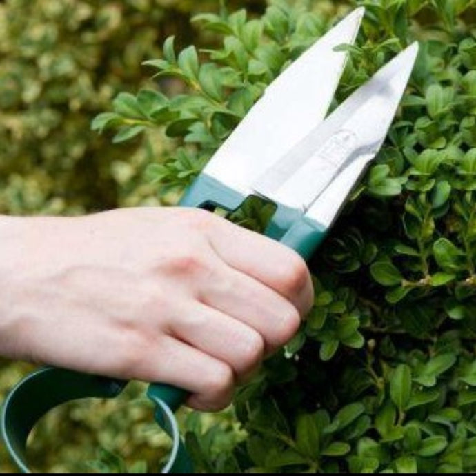 BURGON & BALL | Topiary Trimming Shears - Small in use