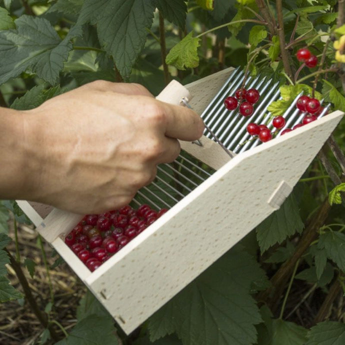 French Style Berry Harvesting Comb