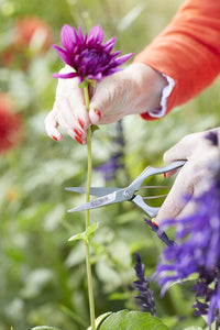 SOPHIE CONRAN | Precision Secateurs in action