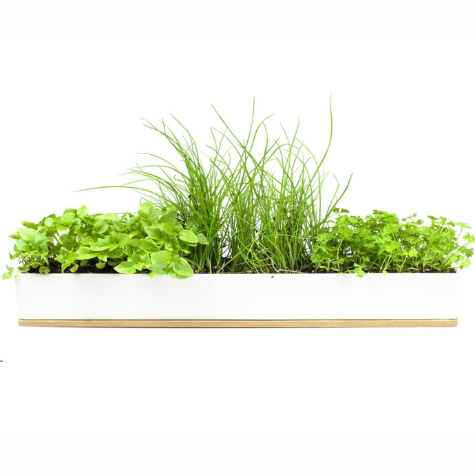 URBAN GREENS | Microherbs Windowsill Box