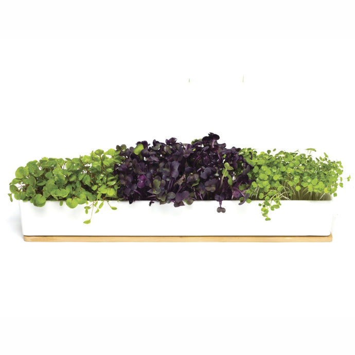 URBAN GREENS | Microgreens Windowsill Box