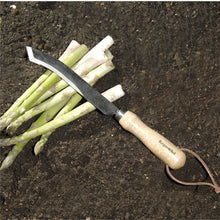 Load image into Gallery viewer, BURGON & BALL | Ultimate Asparagus Knife featured