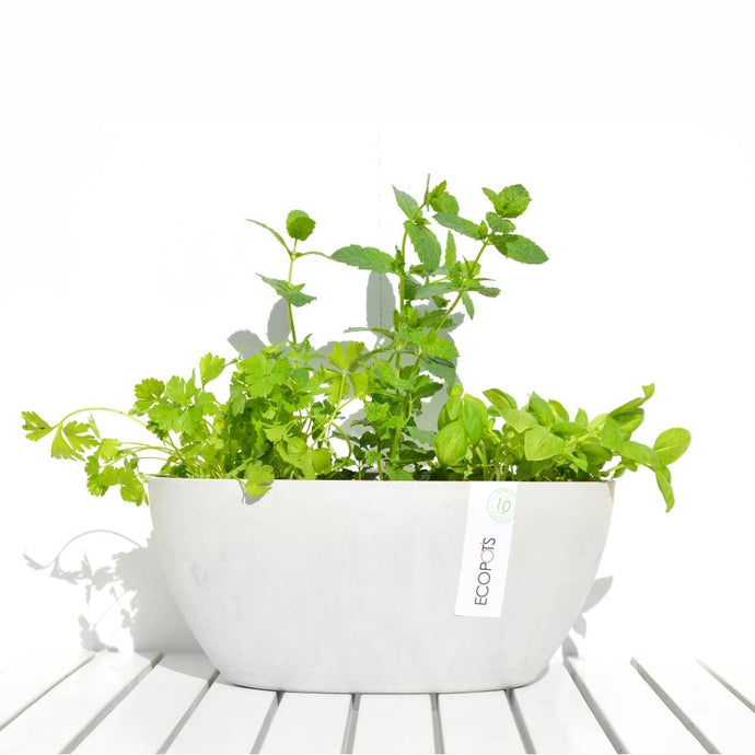 ECOPOTS | Sofia Plant Pot - White Grey