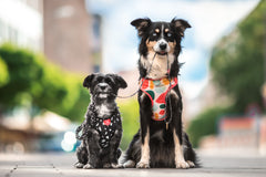 Gentle Pup Dog Harness - Cheeky Chip (3 sizes)
