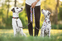 Gentle Pup Dog Leash - Lovely Leia (2 sizes)