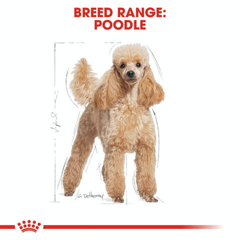 Royal Canin - Poodle Adult Dry Dog Food (1.5kg)
