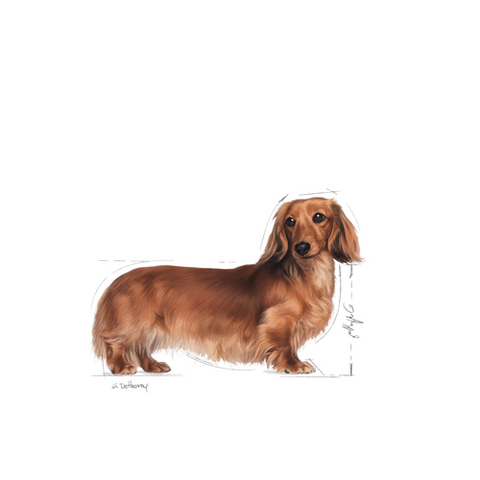Royal Canin - Dachshund Adult Dry Dog Food (1.5kg)