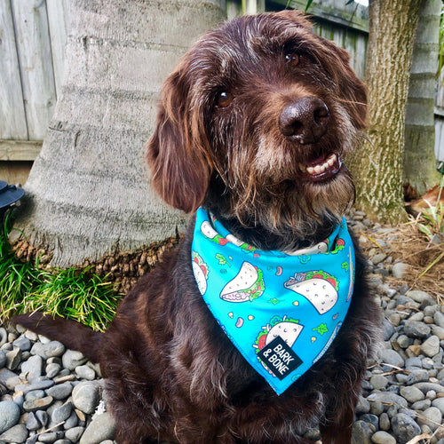 Dog bandana NZ